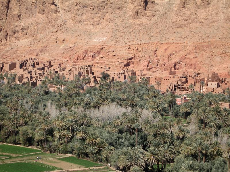 Palmeto, oasi del fiume Draa