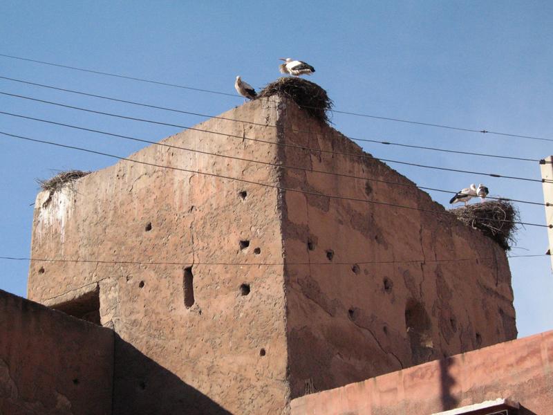 palazzo della Bahia con cicogne