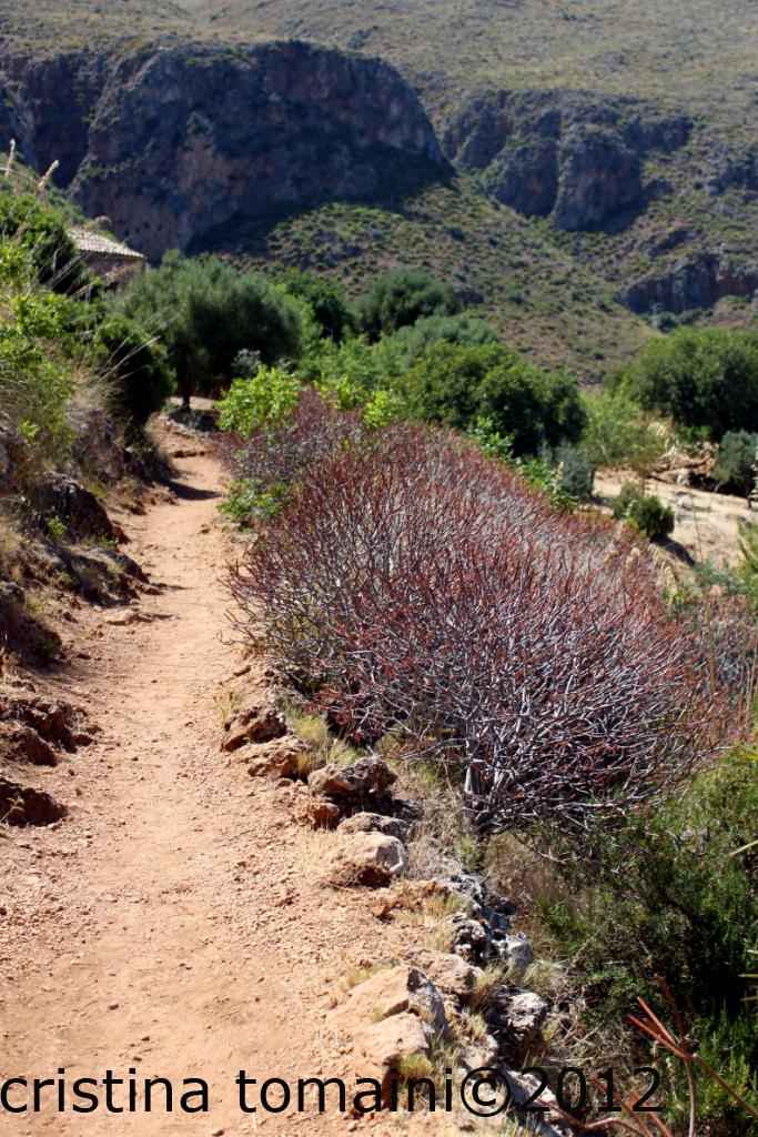 sentiero alla riserva dello zingaro